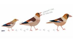 Zapraszamy ptaki do Gdyni