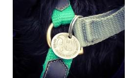 Zarejestruj psa w bazie Urzędu Miasta Gdyni