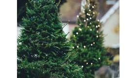 Tu kupisz świąteczne drzewko