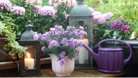 Kwiaty na balkonie - warsztaty miejskiego ogrodnictwa