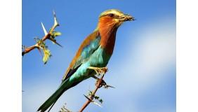 Maszynownia – Co widzisz? Niebo: Dziecięcy warsztat ornitologiczny