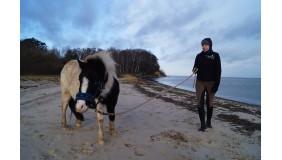 Nadmorskie zajęcia jeździeckie