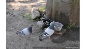 Pomóżmy ptakom w upalne dni
